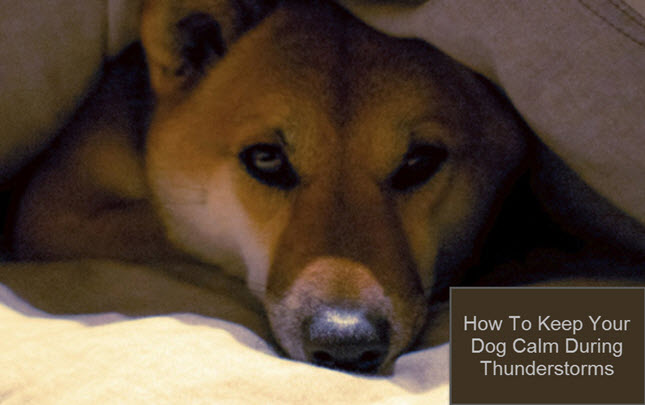 how to help dogs with thunde
