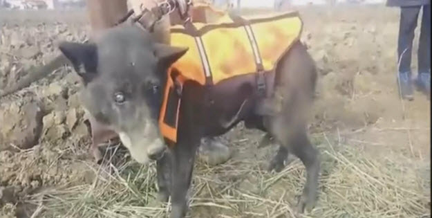 Blind-Dog-Named-Christmas-Rescued