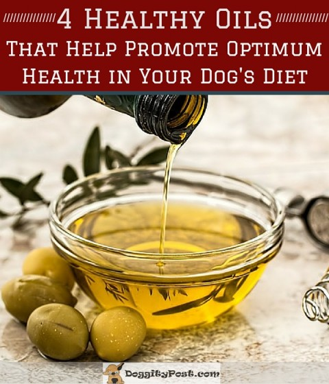 4 Healthy Oils That Help Promote Optimum Health In Your Dog's Diet