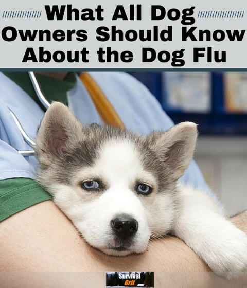 How to Treat the Dog Flu