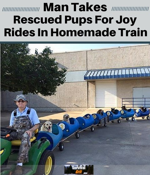Man Takes Rescued Pups For Joy Ride In Homemade Train